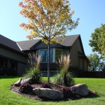 Tree Plant Landscaping Minneapolis, MN
