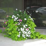 Commercial Landscaping Annuals Minneapolis